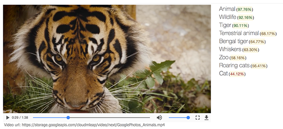 一个里程碑:谷歌实现视频内容识别,并探讨AI民主化