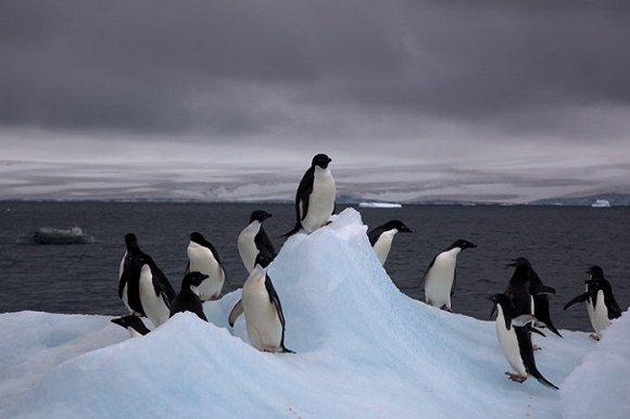 南极今年惊现最高气温17.5摄氏度,中国团友的始祖鸟都穿不住了