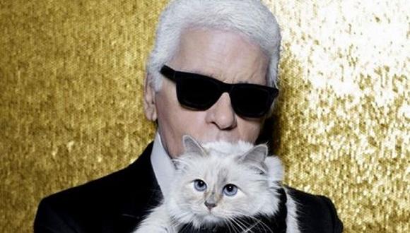 这只时尚界最有名的猫 最近陷入了盗号门事件