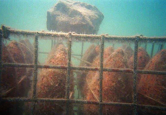 """克罗地亚推出一款""""海底陈年""""葡萄酒,你愿意潜水去把它捞上来吗?"""