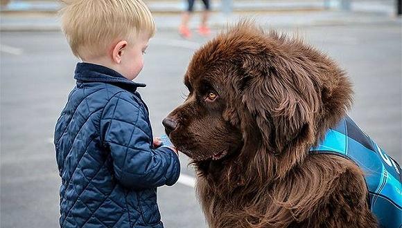 狗和猪都是能缓解乘机紧张感的机场动物理疗师,现在连马也是了
