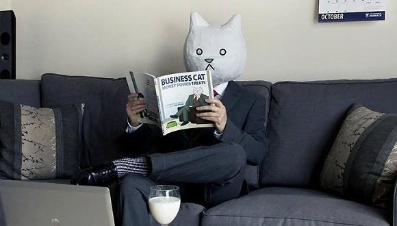 老板与猫是同一种生物