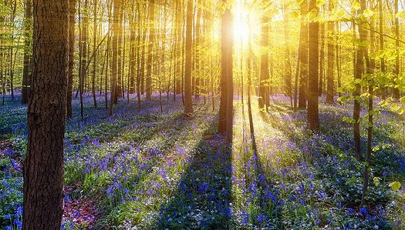 【图赏】三月有个国际森林日,来看看全球神秘的森林奇景