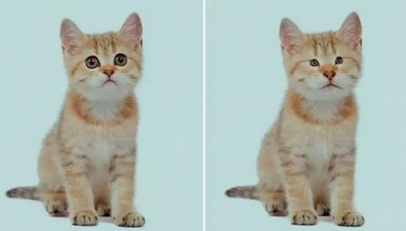 为什么你会对猫上瘾?