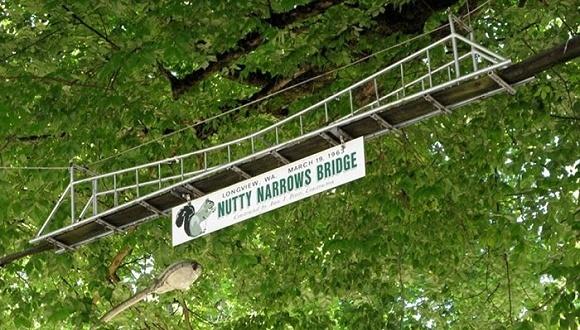 企鹅隧道、红蟹立交桥、棕熊天桥……各国在高速路边给动物搭建的暖心通道