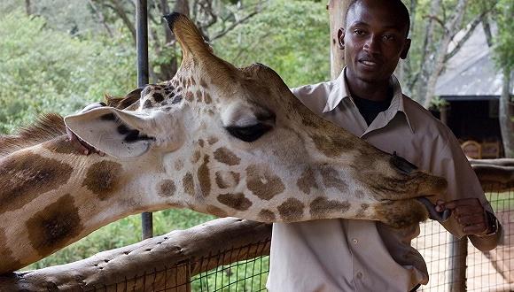 如果庄园里养了长颈鹿 该如何喂它吃东西呢?