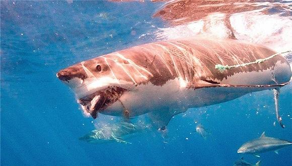 一个沉入海底与鲨鱼做朋友的潜客