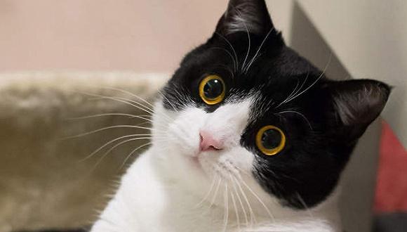 吸猫,还是黑猫警长好