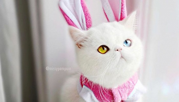 今天就吸Hello Kitty