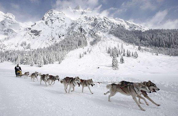 【深度】伟大的雪地征程:阿拉斯加-艾迪塔罗德狗拉雪橇大赛