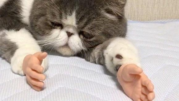 当猫咪长了手以后……